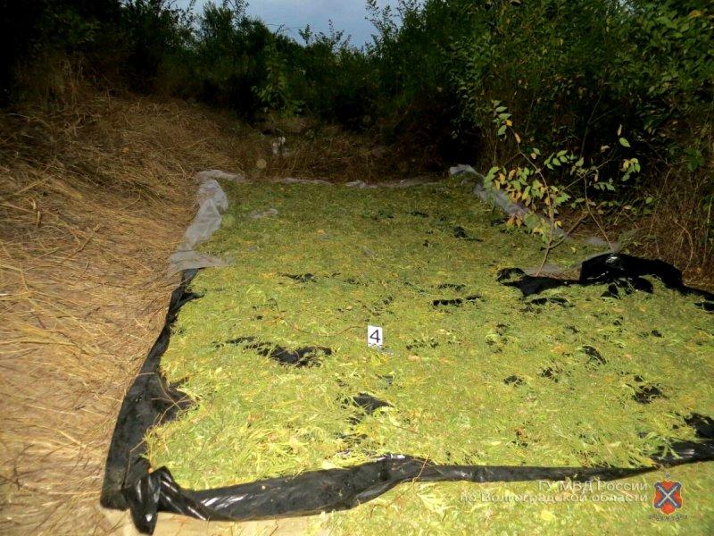 Ужителя Волгоградской области изъяли неменее 90 килограммов конопли