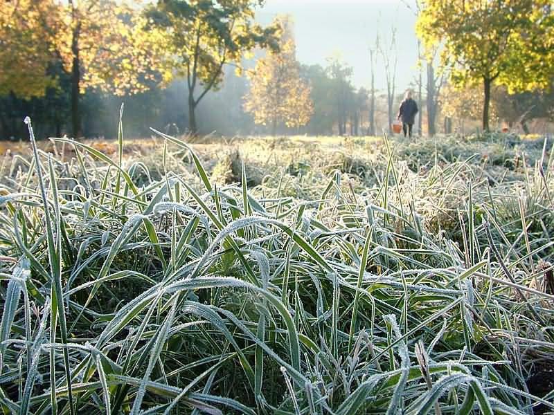 Температура воздуха нанеделе опустится донуля