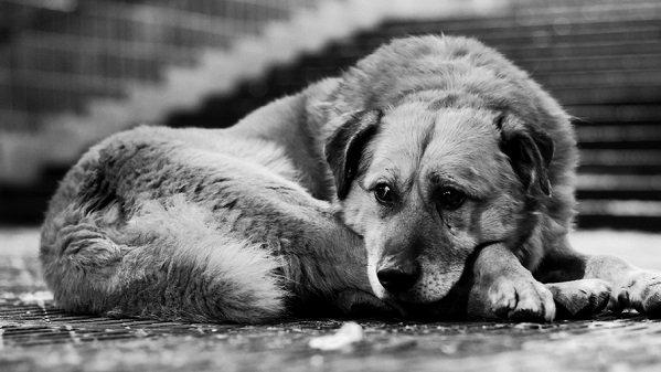 ВАнапе запретили отстреливать бездомных животных