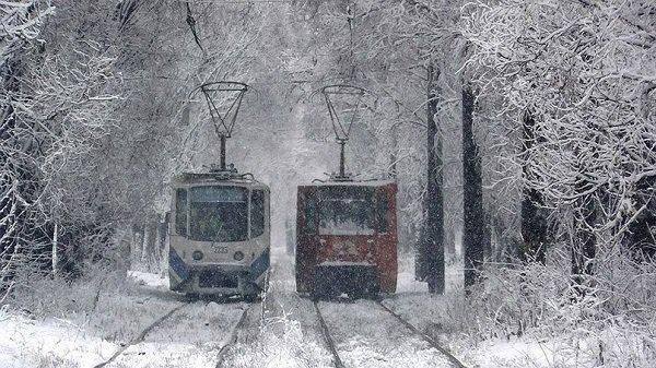 Волгоградских школьников освободят отплаты запроезд вмороз