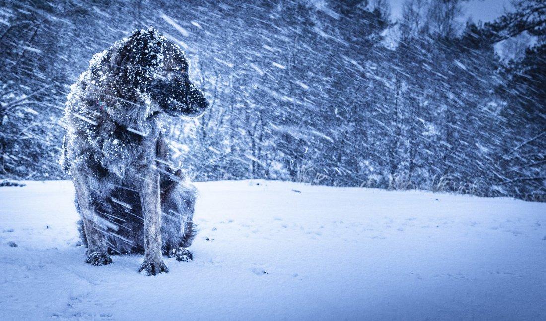 Снегопады иметели ожидаются вВолгоградской области