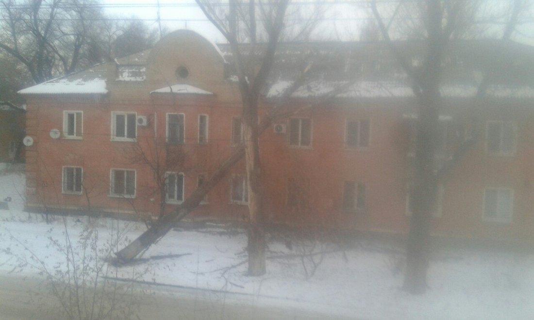 Наюге Волгограда из-за сильного ветра дерево рухнуло надвухэтажку