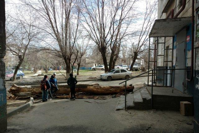 ВВолгограде из-за ветра намашину упало дерево