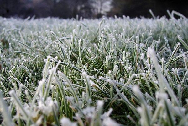 Экстренное предупреждение из-за заморозков объявлено в 3-х областях Юга РФ
