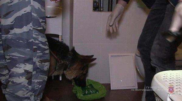 Полицейские изъяли уволгоградца около 2-х  кгсинтетических наркотиков