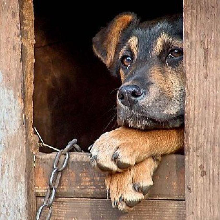 В Саратове истязатель дворового пса идет под суд