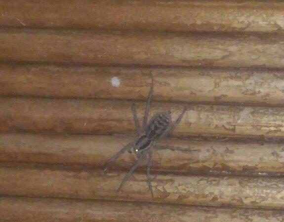Волгоградцы кошмарят друг друга снимками заползающих в дома пауков