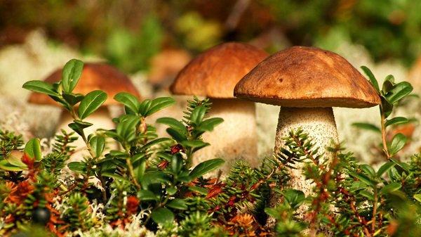 За лето грибами отравились 14 жителей Волгоградской области