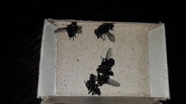 Жителей поселка ГЭС атаковали огромные мухи