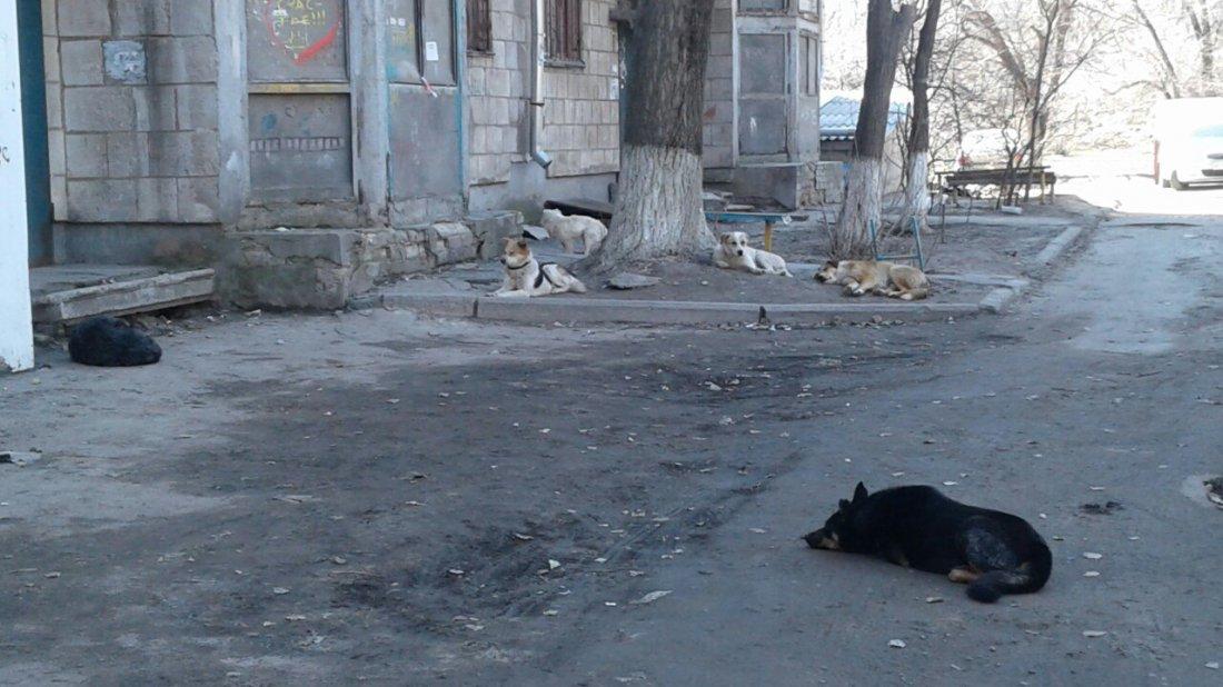 Свора бездомных собак во дворе на Красном разделила волгоградцев на два лагеря